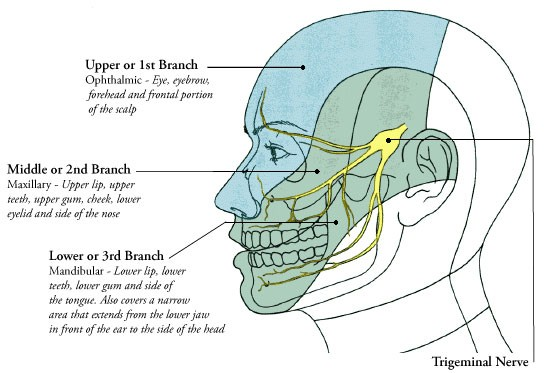 facial pain doctor ny