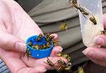 Bees flying out of a blue bottle cap