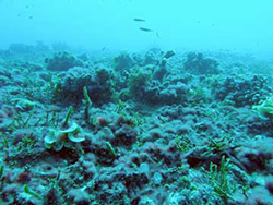 Oceans on the Precipice: Scripps Scientist Warns of Mass ...