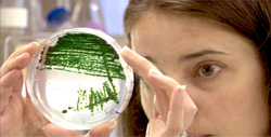 Algal Biofuels Research