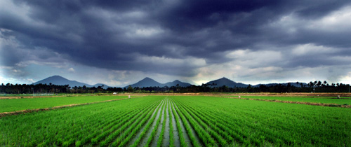 Photo Rice field