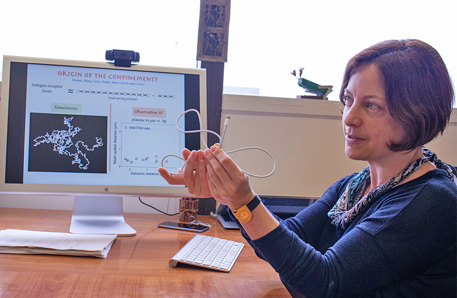 Olga Dudko uses a charge cord to demonstrate genomic interactions within the nucleus of a cell. Photo by Michelle Fredricks, UC San Diego Physical Sciences