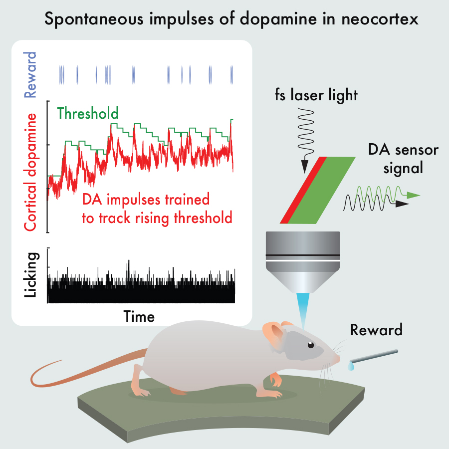 'Feel Good' Brain Messenger Can Be Willfully Controlled