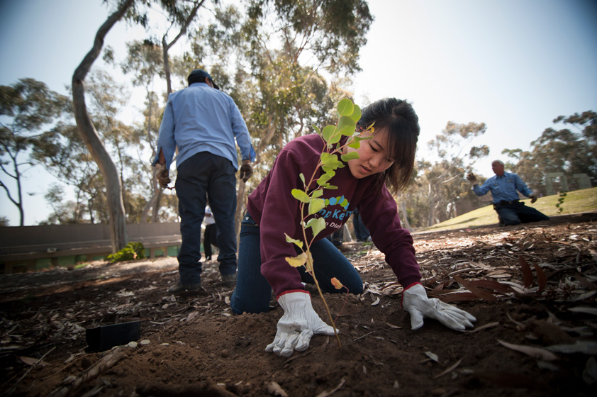 2nd year Marshall student, Jenny Li, plants a tree to help the environment.