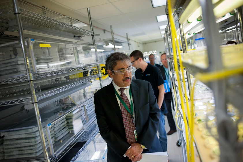 Khosla toured the facility with Sapphire Energy's chief science officer, Alex Aravanis, and the company's director of biotechnology, Yan Poon.