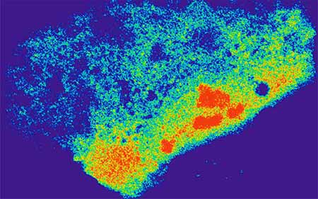 Image: A cell carrying an RNA-targeted Cas9 system