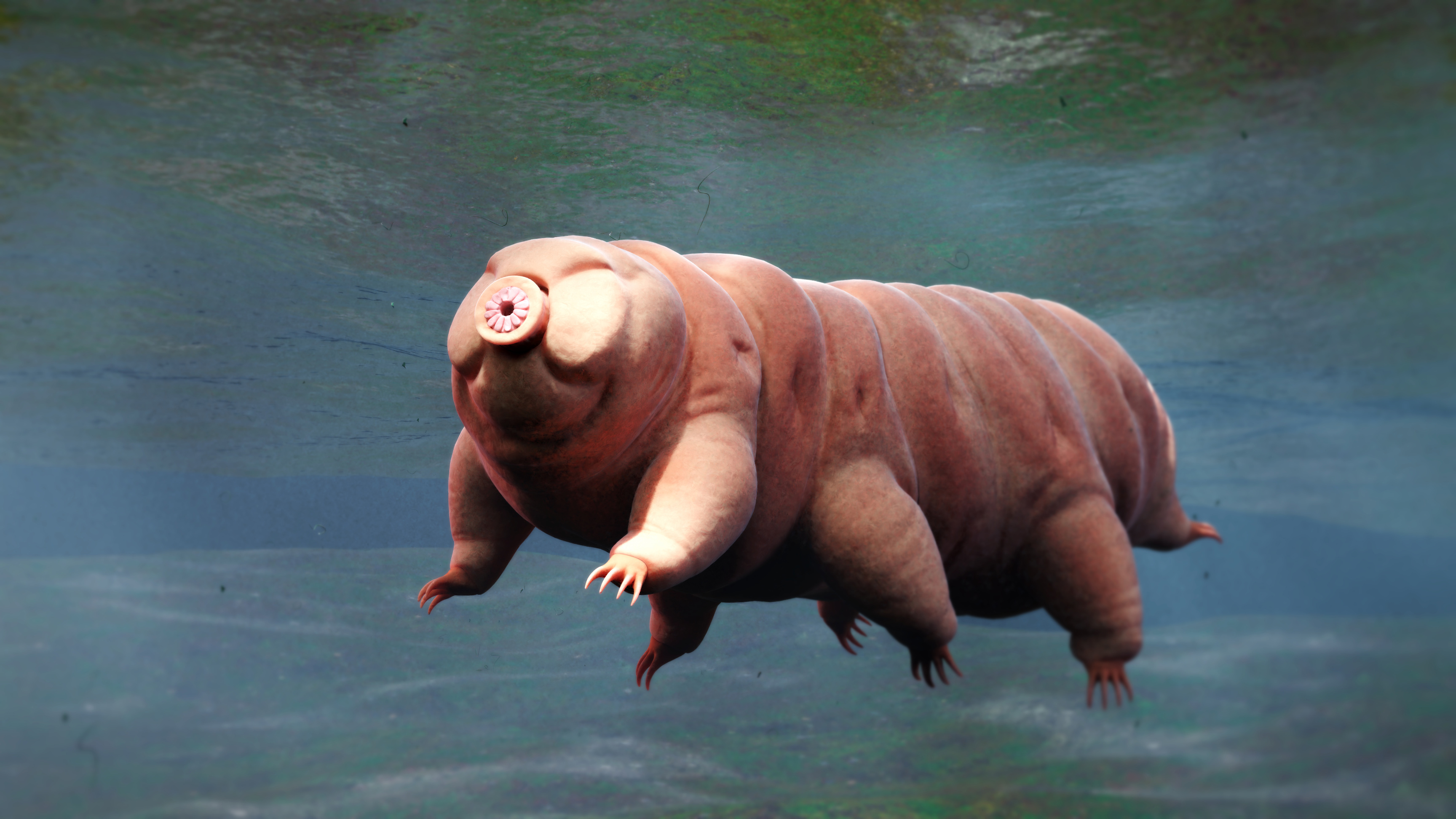 Cracking How 'Water Bears' Survive the Extremes