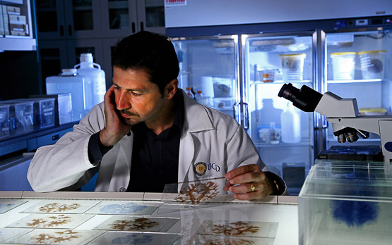 <p>Jacopo Annese examines final brain tissue slides, which were also digitized for study by researchers worldwide.</p>