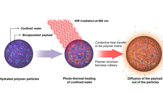 <p>In this schematic representation, a hydrated polymeric nanoparticle is exposed to near-infrared light. The NIR heats pockets of water inside the nanoparticle, causing the polymer soften and allowing encapsulated molecules to diffuse into the surrounding environment.</p>