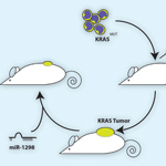 MicroRNA Specifically Kills Cancer Cells with Common Mutation