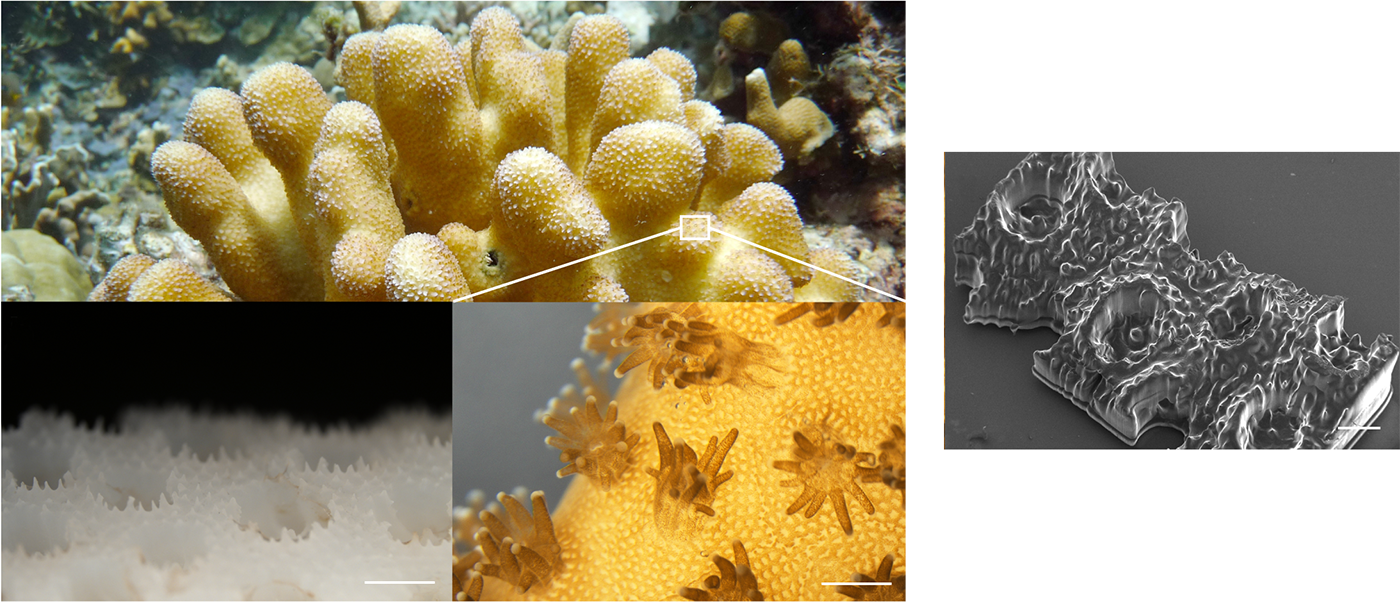 Close-up of coral reef structures at the microscopic level