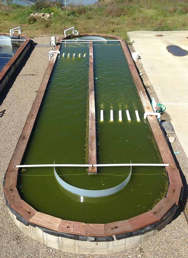 Image: One of the outdoor ponds at UC San Diego used to grow algae for making biofuels