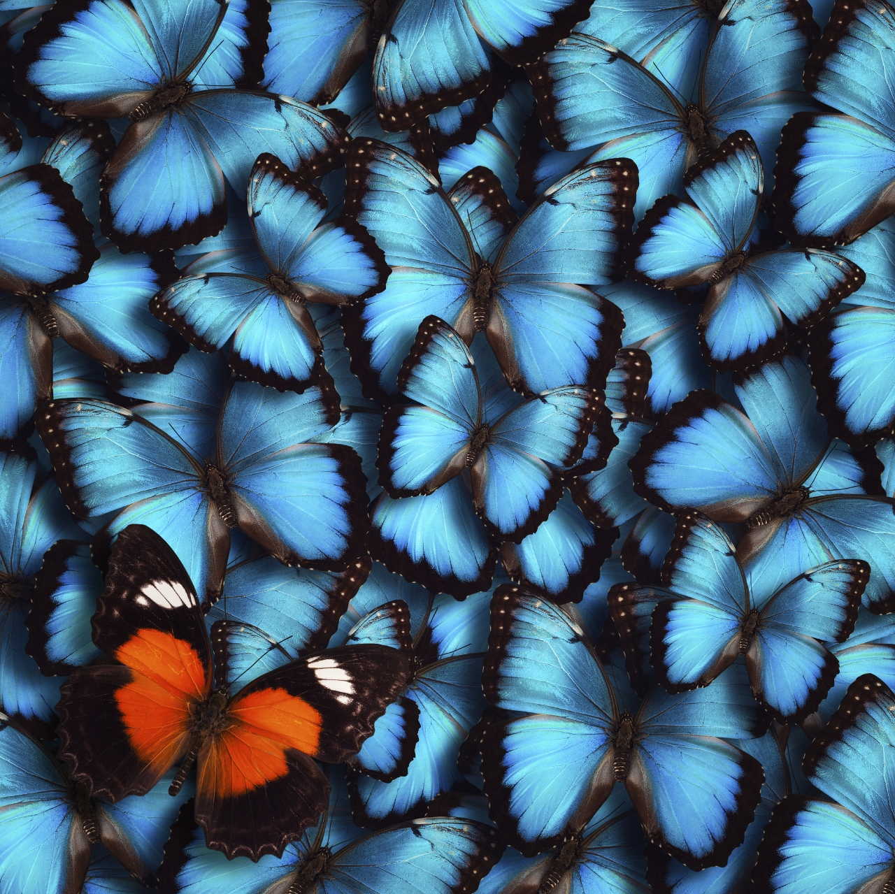 x ray snapshot of butterfly wings reveals underlying physics of color