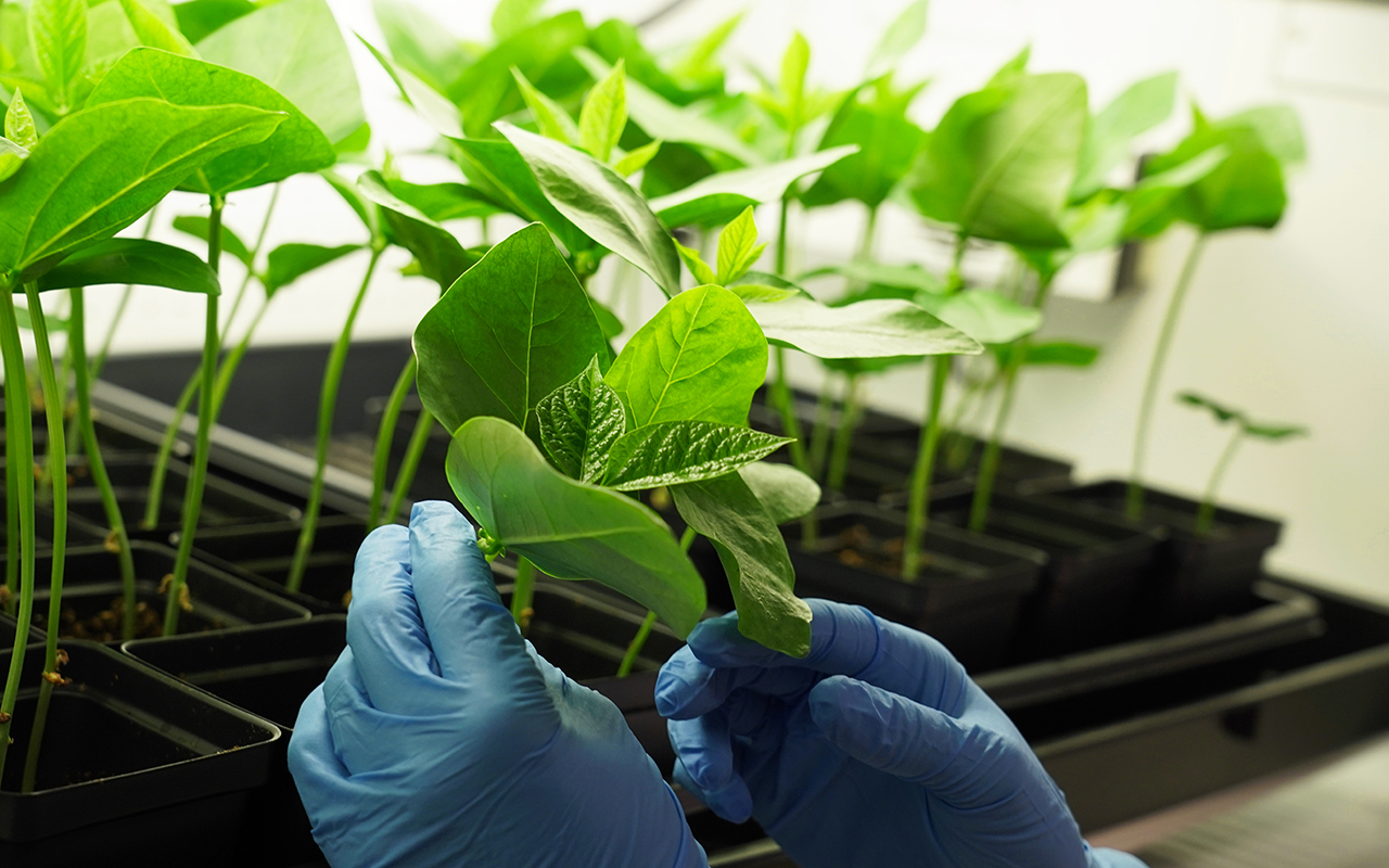 Two hands wearing blue gloves touch one plant in a tray of small plants.