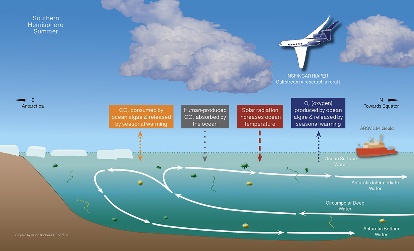 Image: Infographic of the ORCAS field campaign courtesy of Alison Rockwell/NCAR EOL