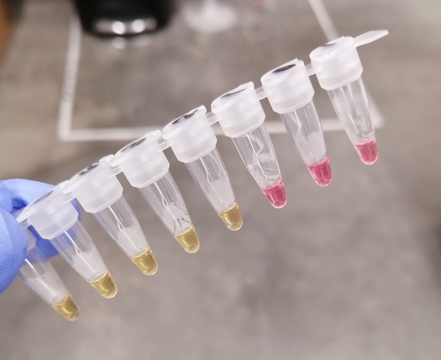 Series of test tubes containing yellow and pink liquid