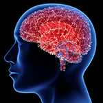 Updated Brain Cell Map Connects Various Brain Diseases to Specific Cell Types