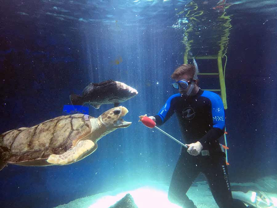 aquarium employee feeding a turtle
