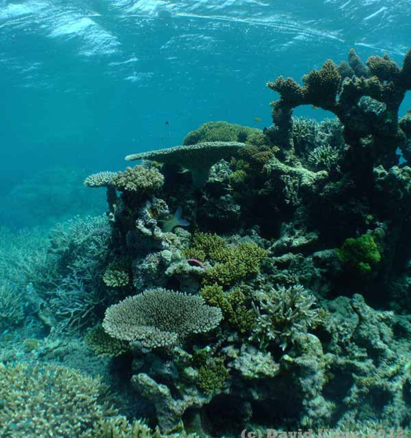 Photo: Heron Reef flat, a coral reef located in the southern part of Australia's Great Barrier Reef