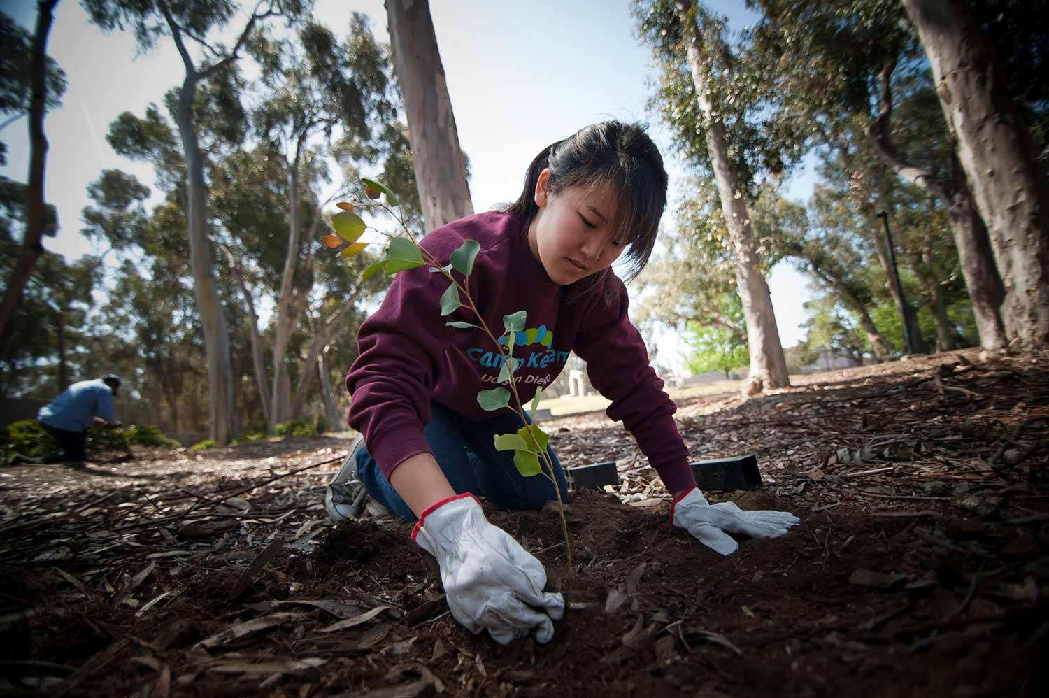 UC San Diego student planting tree for earth month