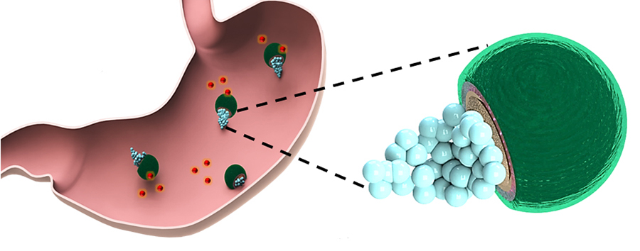 Drug-delivering Micromotors Treat Their First Bacterial Infection in the Stomach  Drug-delivering...