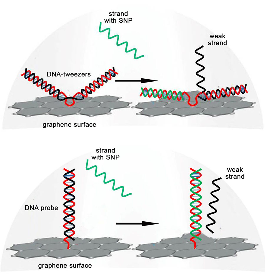 DNA strand displacement
