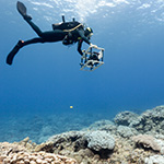 Scripps Scientists Use Photomosaic Technology to Find Order in the Chaos of Coral Reefs
