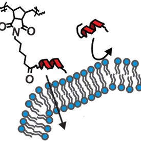 Brushing Up Peptides Boosts their Potential as Drugs