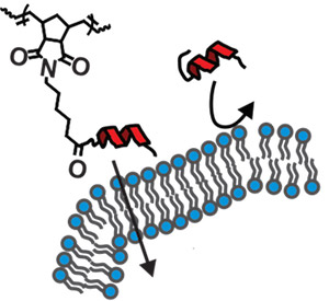 Image: peptide brush