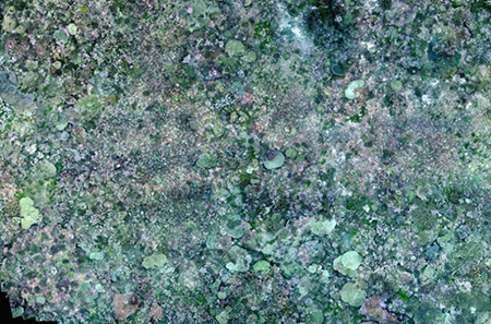 Photomosaic of site FR3