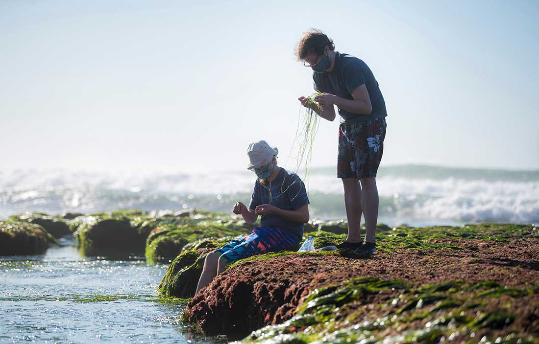Tristan de Rond and Immo Burkhardt search for red seaweeds.