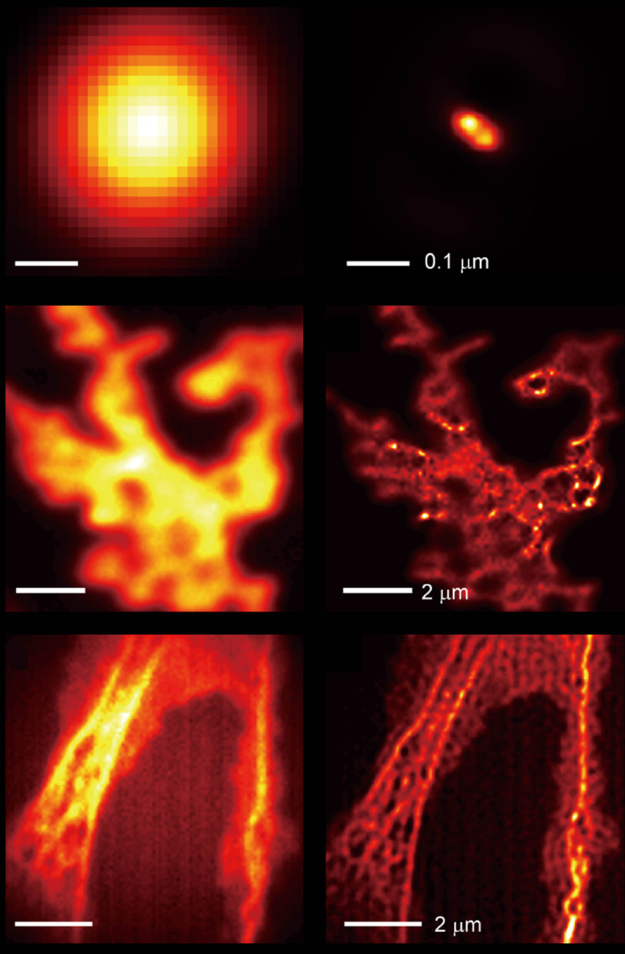 Microscope images displayed in orange against a black background.