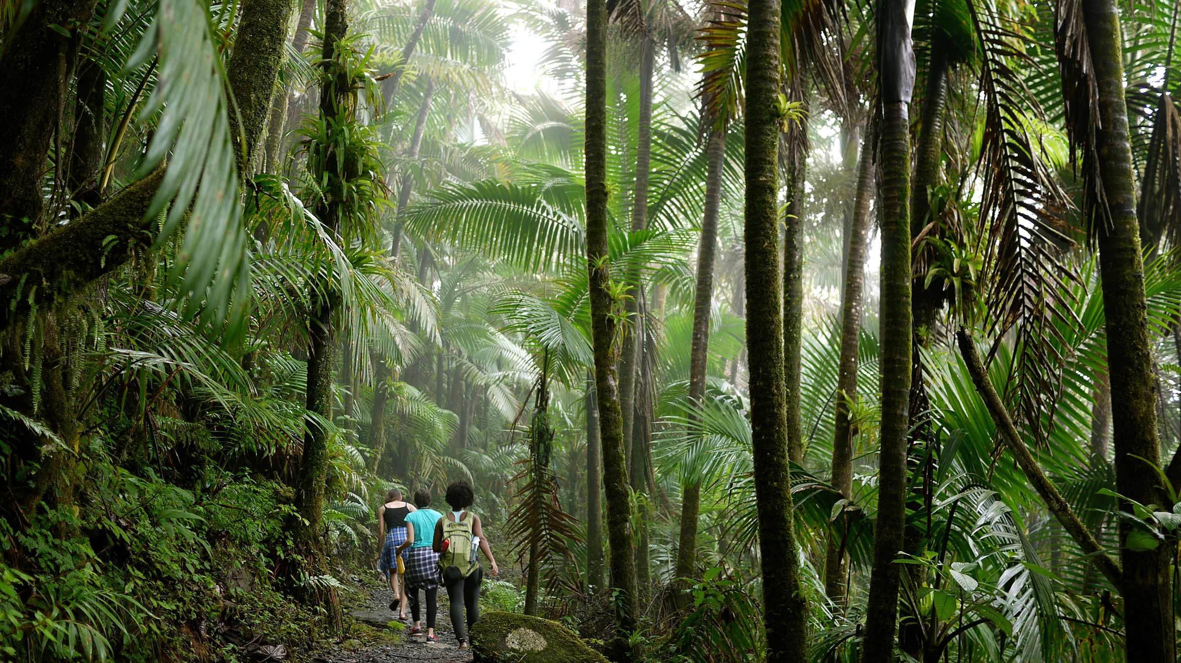 UC San Diego hiking trail in Puerto Rico forest