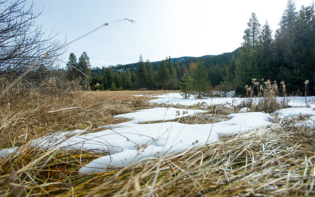 A patch of melting snow in a meadow, with green trees and brown mountains seen in the background.