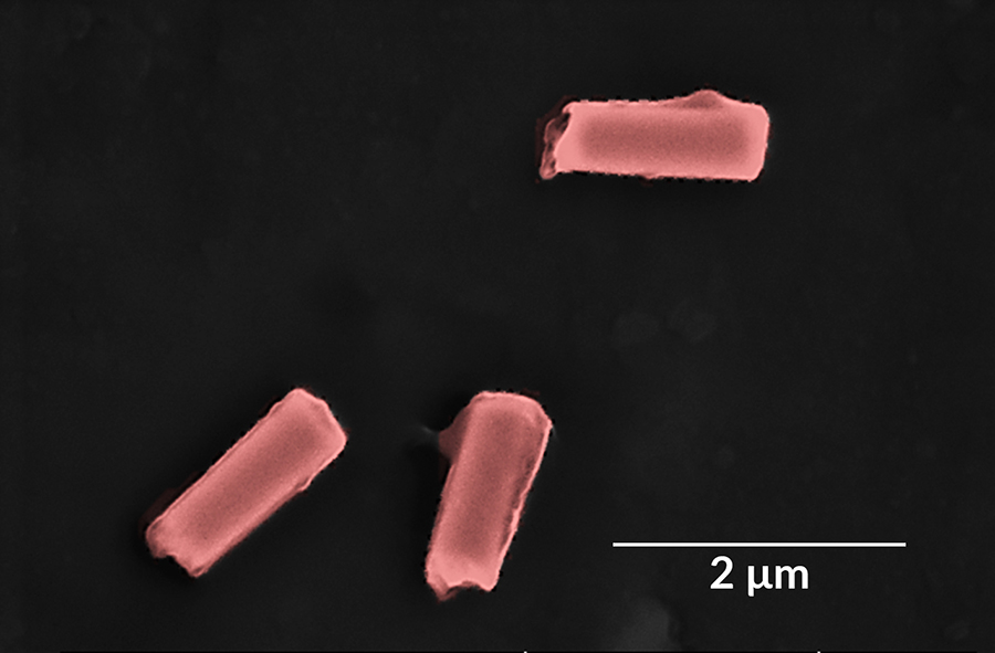 nanorobots coated in hybrid cell membranes