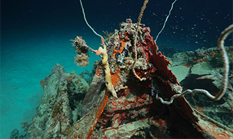 Downed World War II Aircraft Recovered
