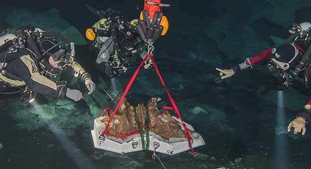Diving for the Bones of the Ice Age