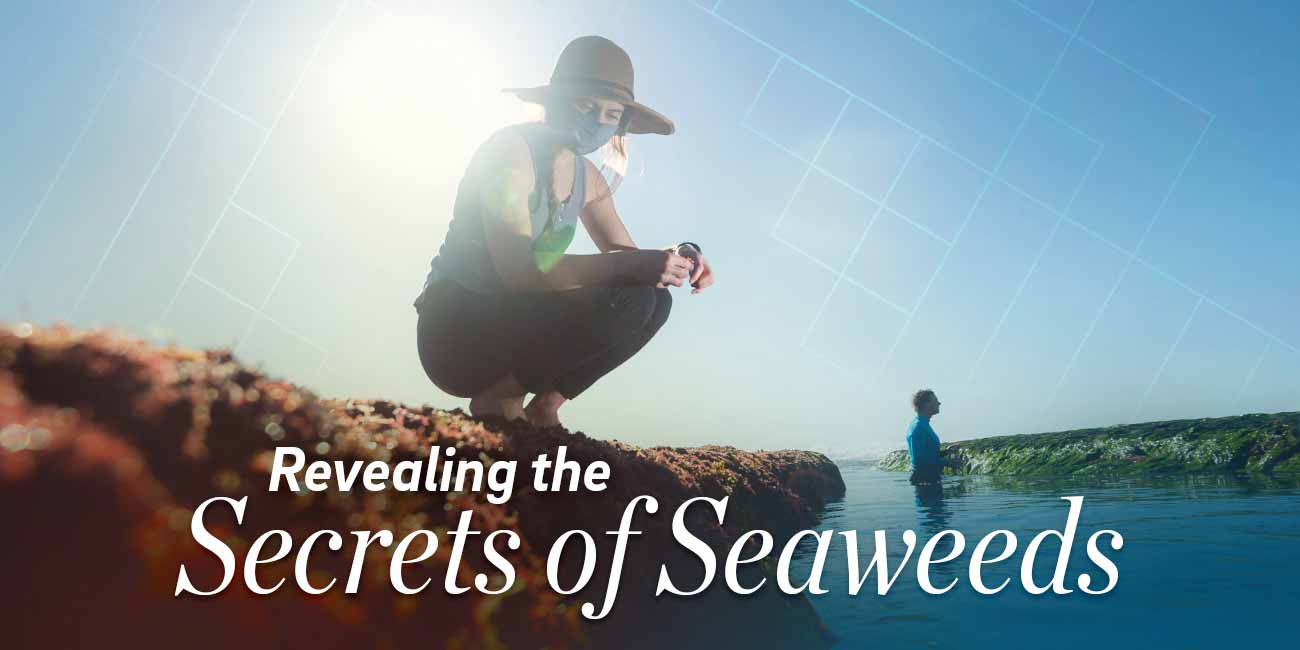 Revealing the Secrets of Seaweed